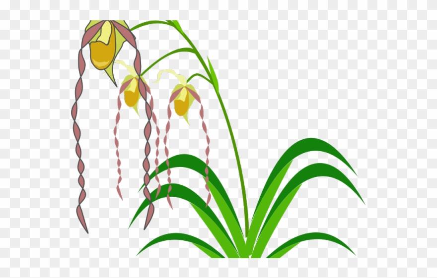 flowering-plant # 4848426