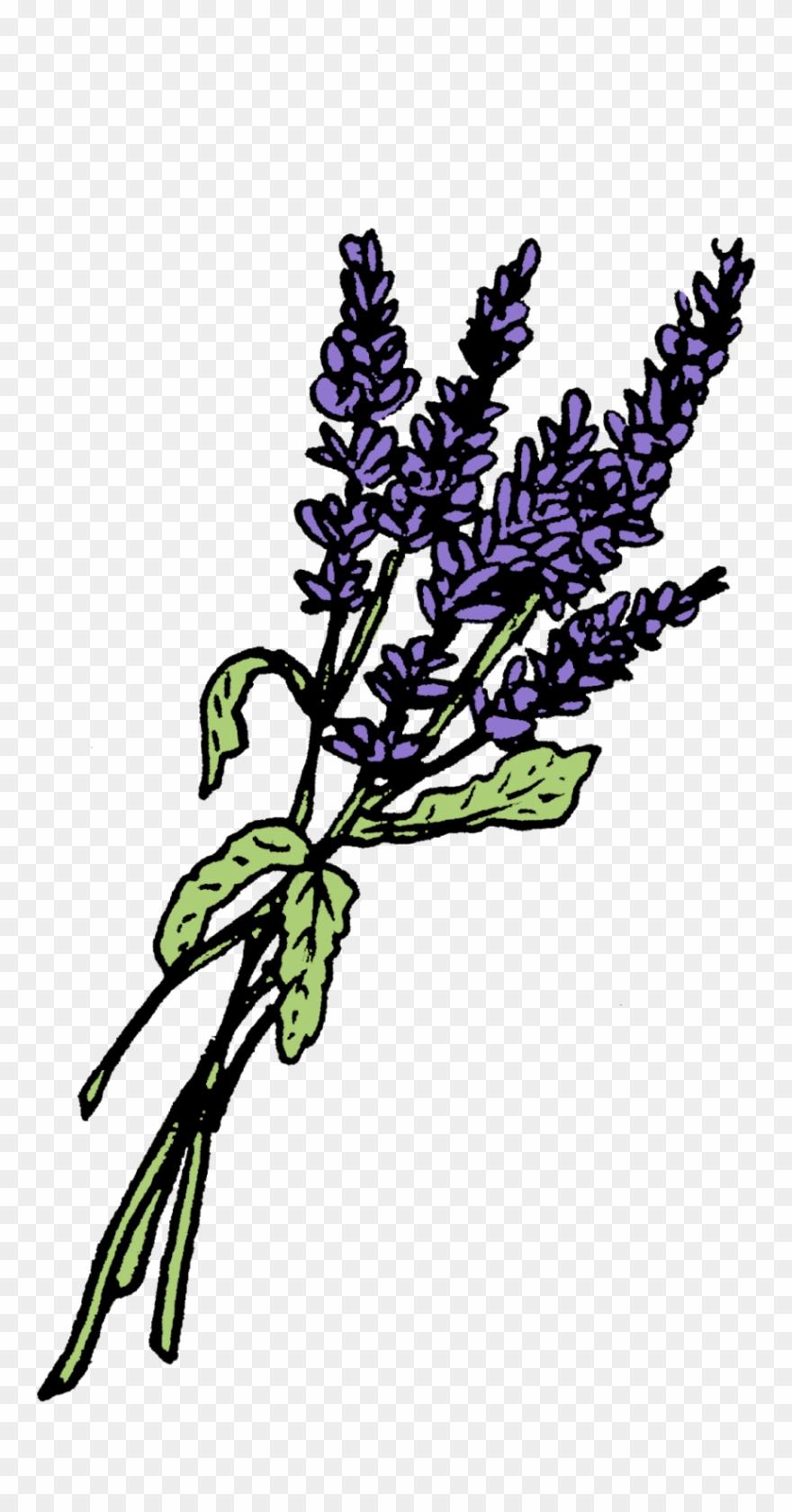 plant-stem # 4853056