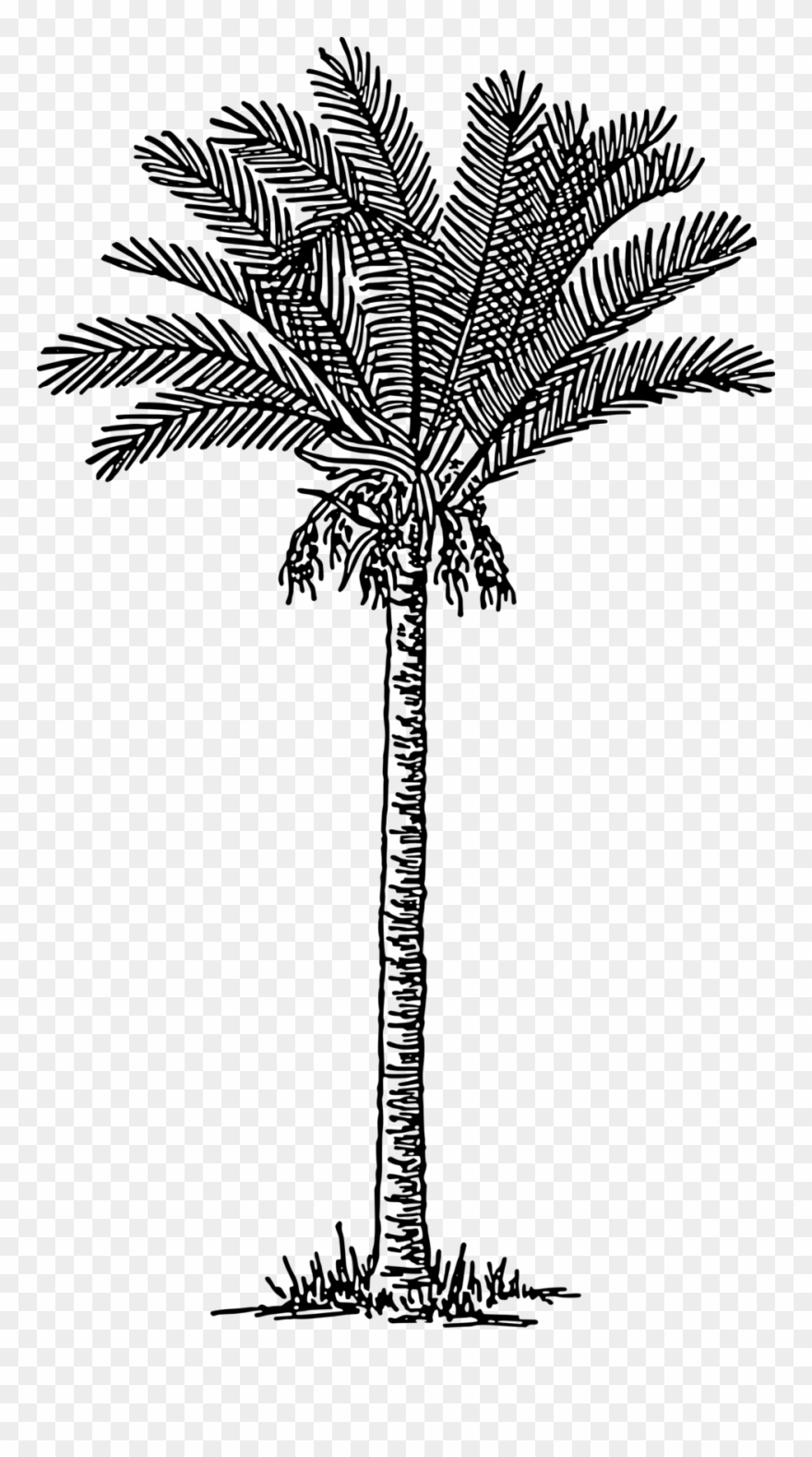 palm-tree # 4855668