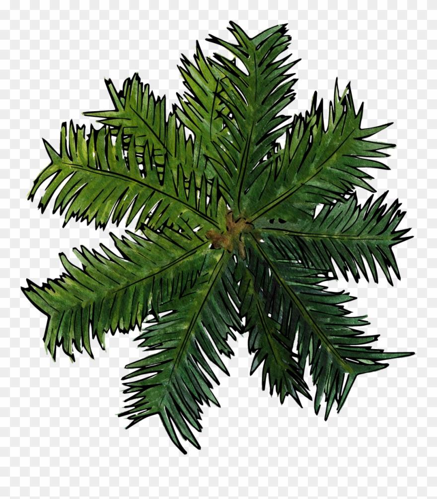 palm-tree # 4851876