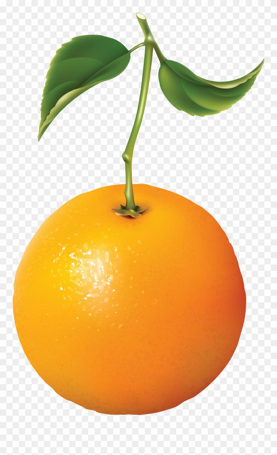 orange # 4853845