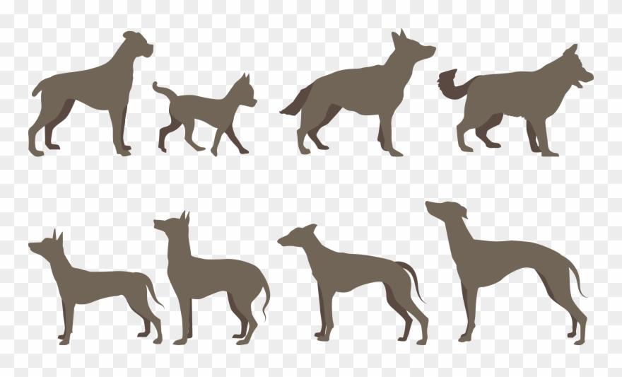 dog-breed # 4853617